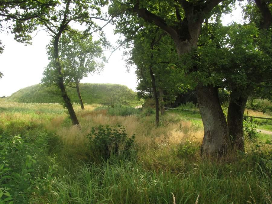 Blick zwischen Eichen und über Wiese hinweg entlang des Weges am Danewerk auf die rekonstruierte Schanze.