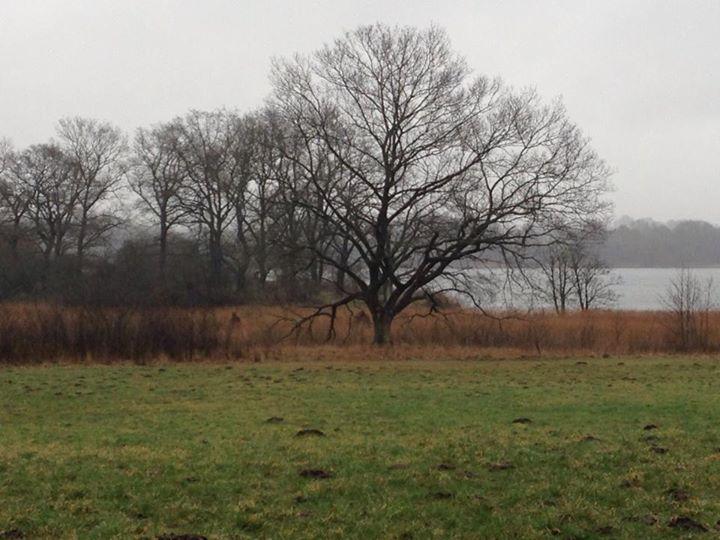 Im Hintergrund die Wasserfläche des Haddeber Noores, im Vordergrund eine Grasfläche. Im Schilfgürtel dazwischen sind dreieckige Erhebngen undeutlich zu erkennen.